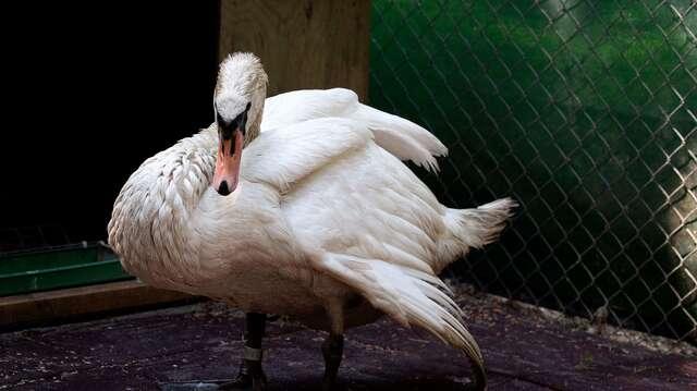 Vildfågel